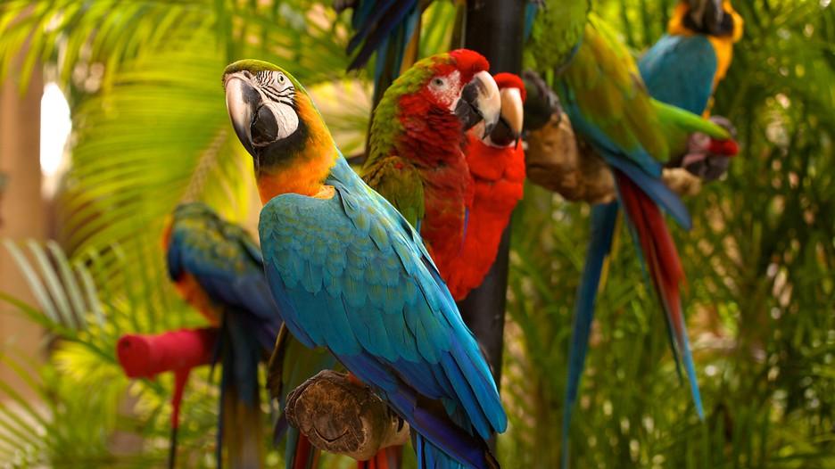 Jungle-Island-Miami-59270