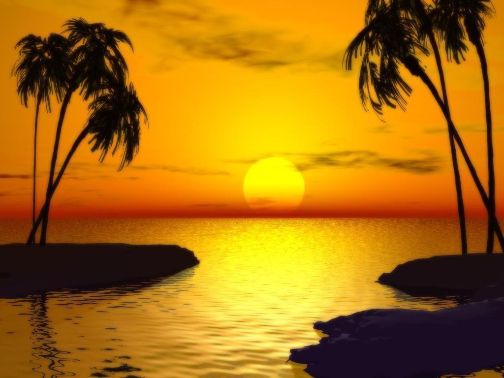 beautiful-sun-set-trees-1