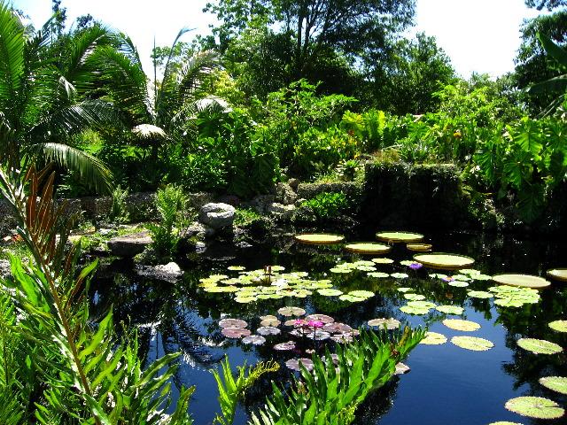 165020-gradina-botanica-tropicala-fairchild