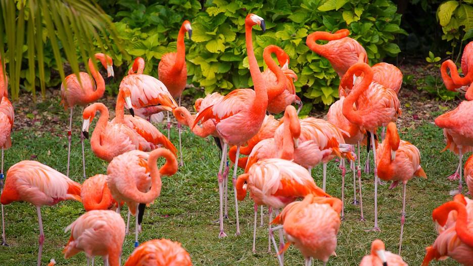 Jungle-Island-Miami-59259